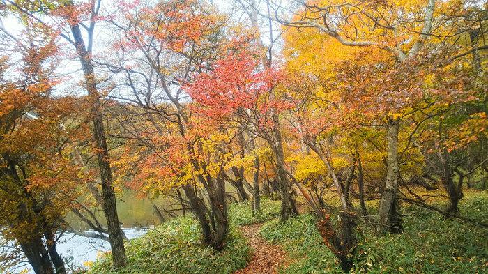 紅葉の赤城登山